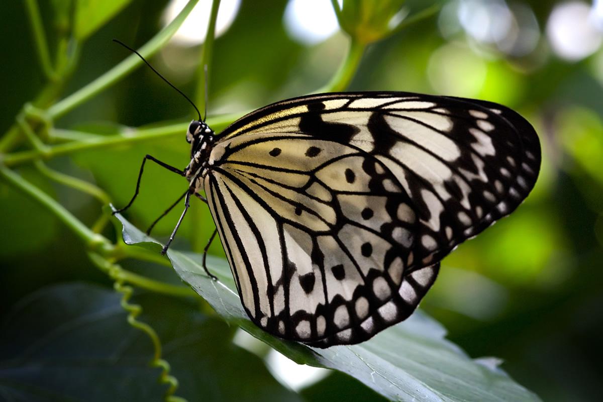 Victoria Butterfly Gardens Photos Travelogue Reviews