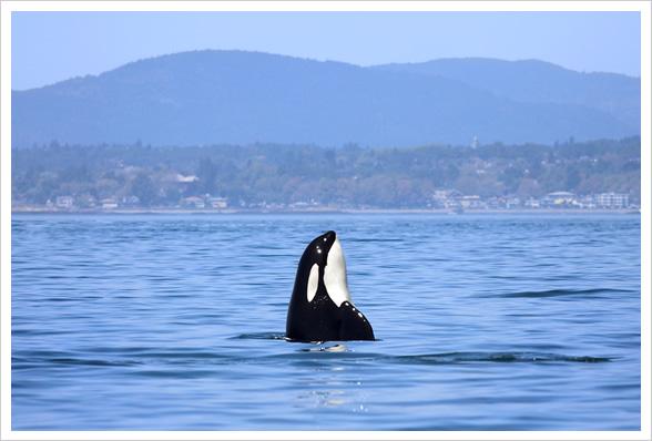 Orca Tour